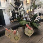 betula cocktails aspen