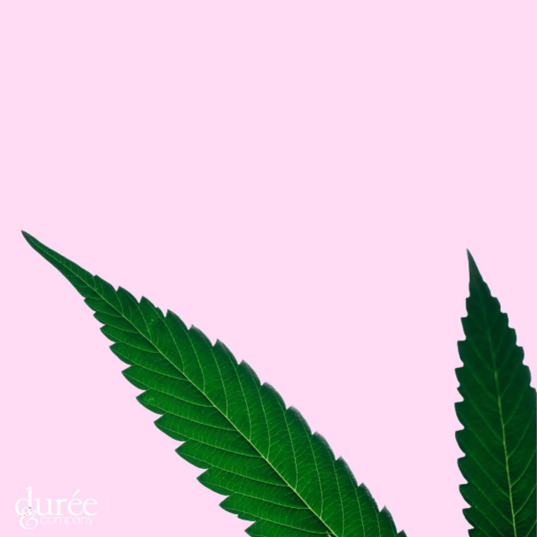 Cannabis Public Relations, D&Co